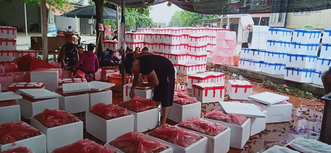 chuyển hàng đông lạnh TP.HCM đi Hà Nội