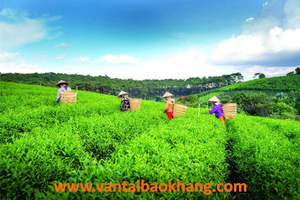 chuyển hàng từ Lâm Đồng đi Campuchia